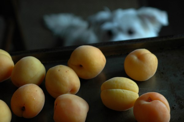 apricot Sorbet (1 of 1)-6