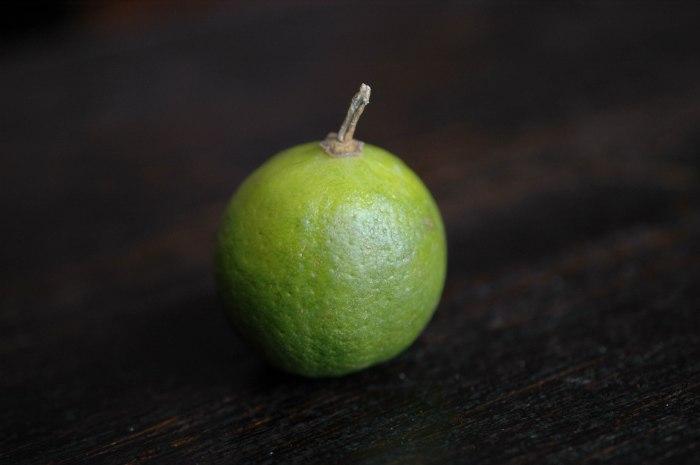 Key Lime Pie Bars-2