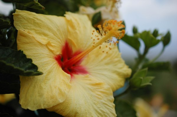 Hawaii - Flora and Fauna-3