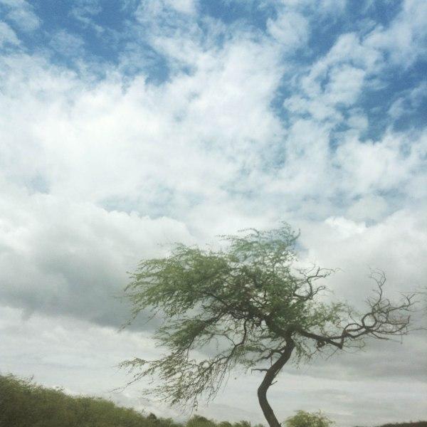 scenery-11